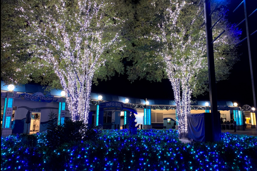 Sea World white and blue Christmas lights